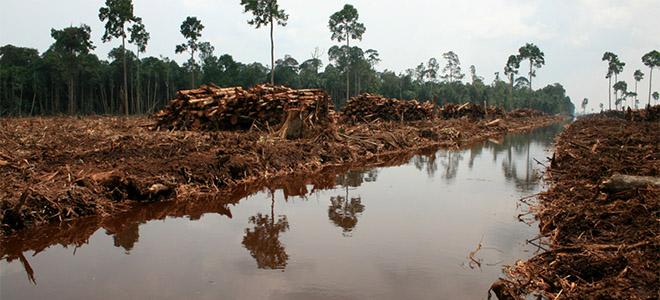 rainforest2